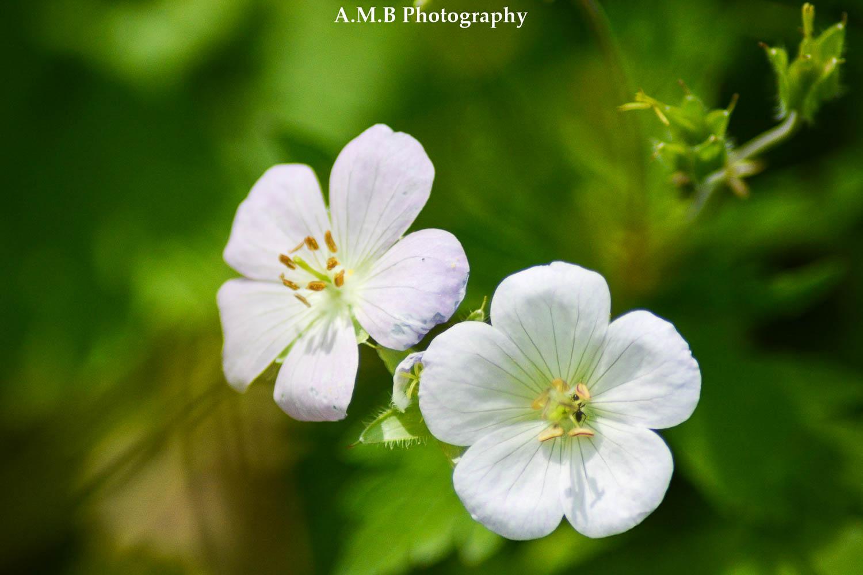 2 White Wildflowers