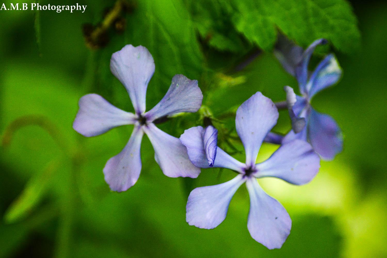 Matthiessen Wildflowers II