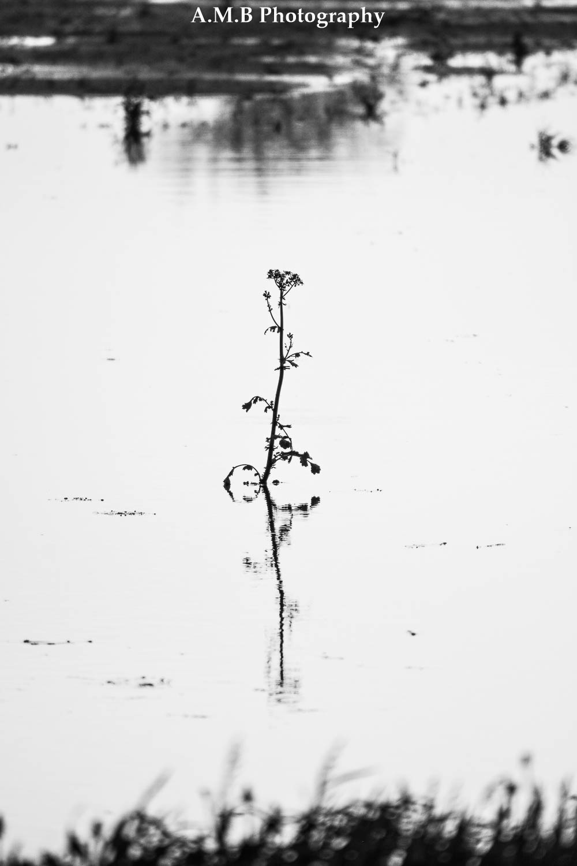 Plant's Reflection II