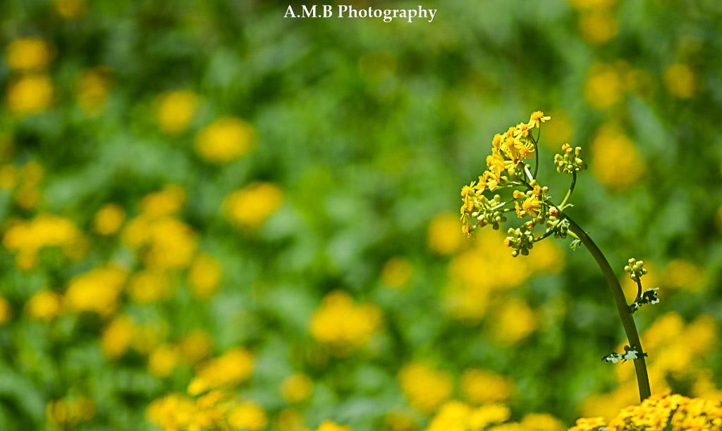 Riverside Wildflower
