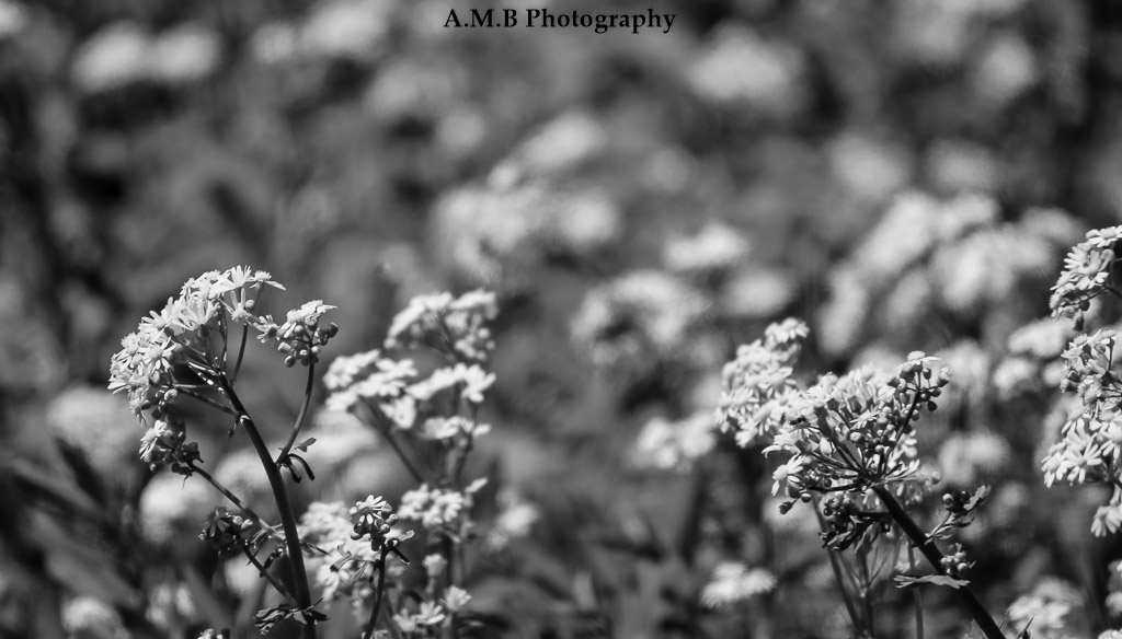 Riverside Wildflowers II
