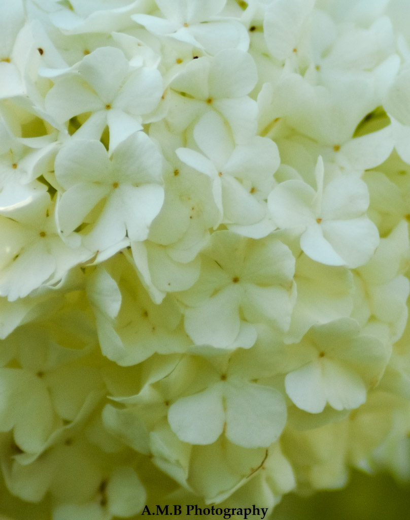Snowball of Flowers