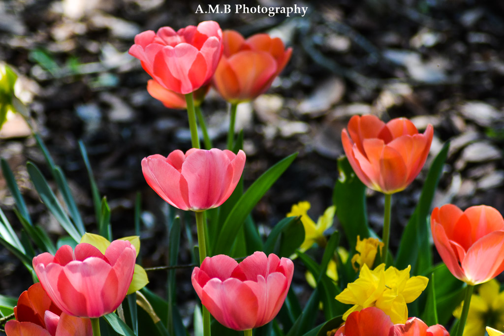 Sunny Spring Blooms II