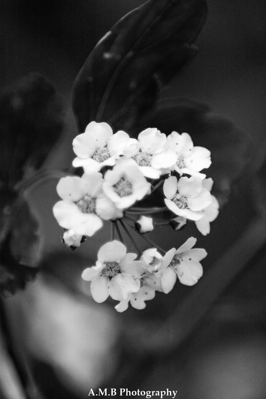 Tiny White Flowers III