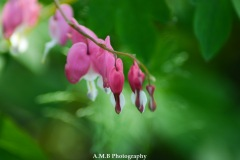 Bleeding Hearts IV