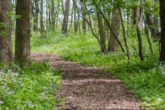 Humiston Woods Nature Trail