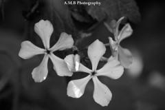 Matthiessen Wildflowers