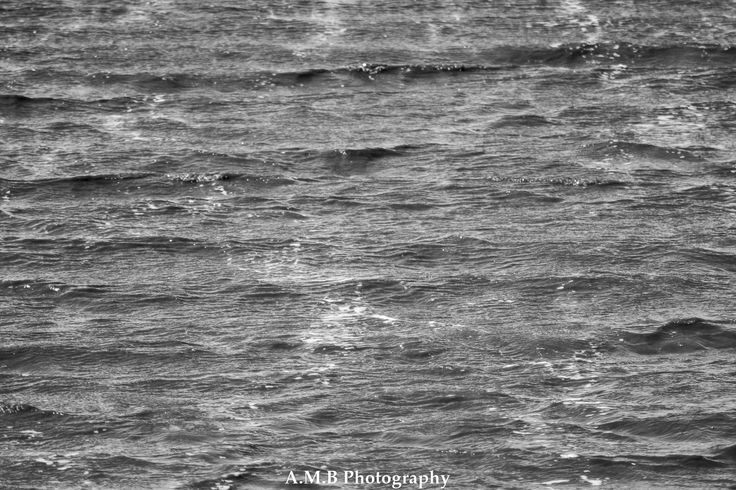 Black and White Flood Waves