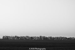 Early Spring Morn Tree Line