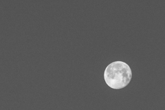 Full Moon Remnants in Black and White