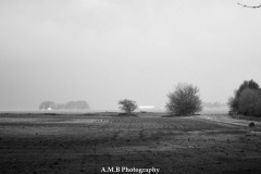 Spring Rain II