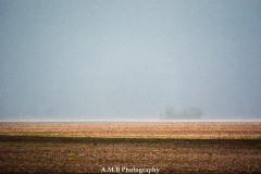Spring Rain IV