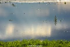 Sunny Flood