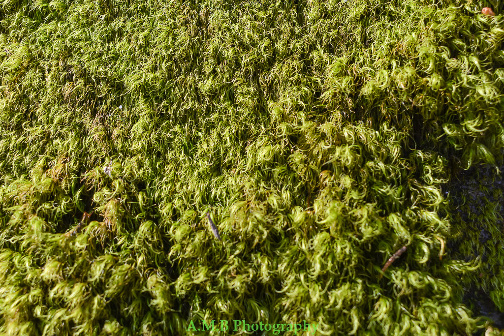 The moss growing in this Southern Illinois State Park was so awesome. It felt so soft and was like carpet.