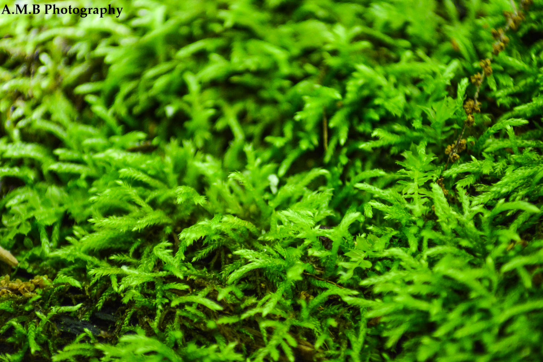 Fire Moss V