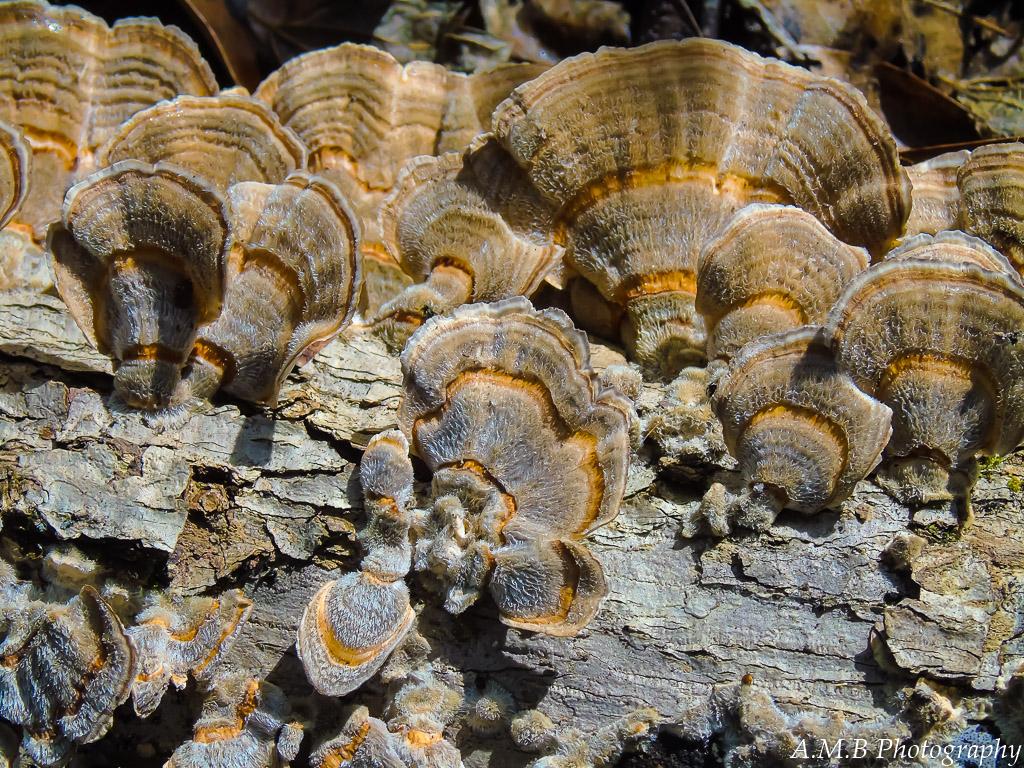 Fuzzy-Fungi