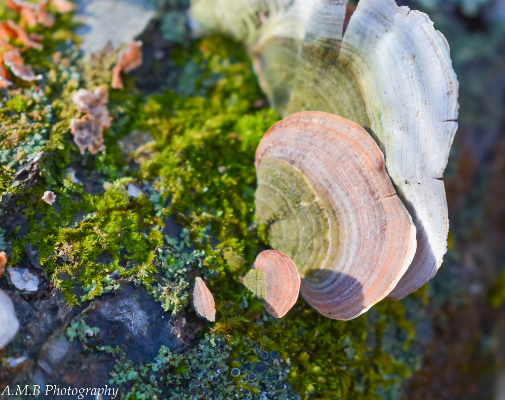 """Hotchpotch - A """"hotchpotch"""" of fungi, lichen, mushrooms, and moss living together on a fallen tree."""