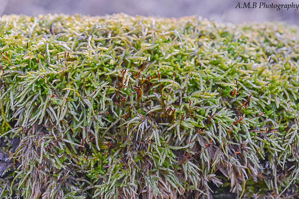 Macro shot of a moss covered fallen tree.