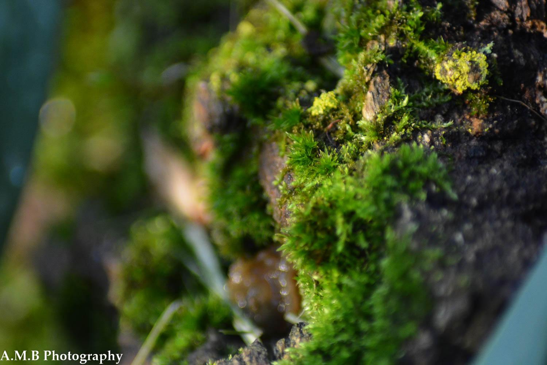 Mossy Stump III