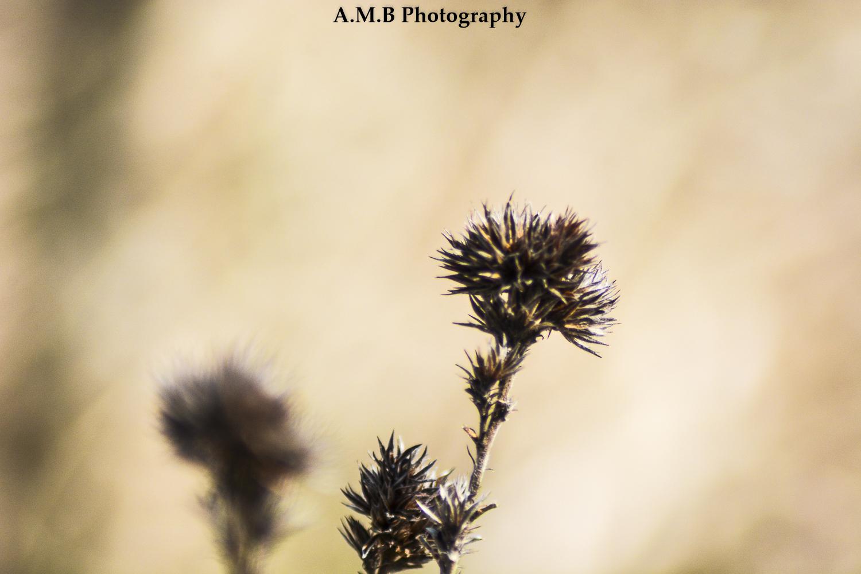 Sand Ridge Meadow III