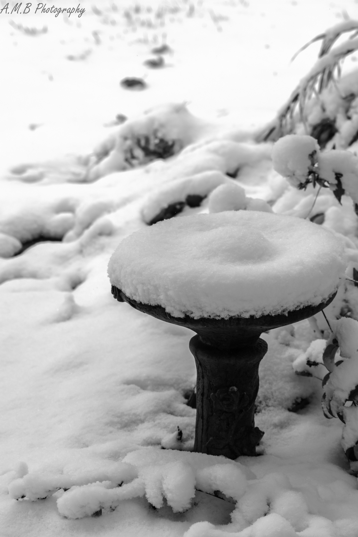 Snow Covered Birdbath