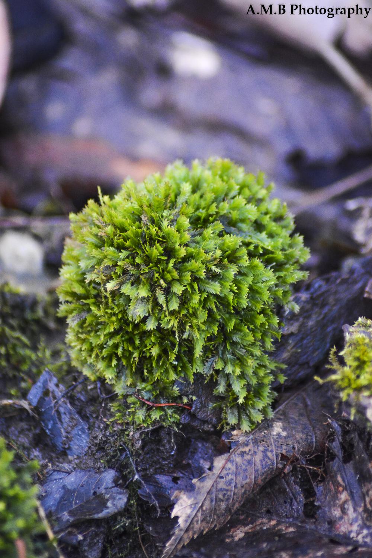 Winter Moss II