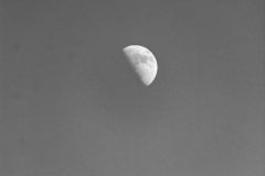 1st Quarter Moon in Black and White II