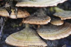 Feeding Fungi