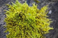 Macro Moss III