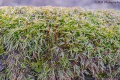 Macro shot of a moss covered fallen tree.