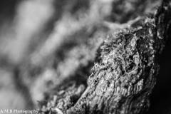 Mossy Stump II