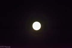 November Full Moon III