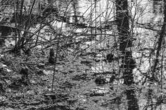 Sand Ridge Swamp