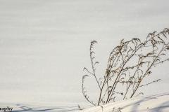 Snowy Backyard IV