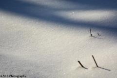 Sparkling Snow III