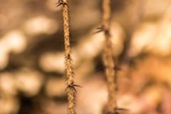 Thorny Growth