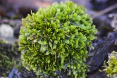 Winter Moss II