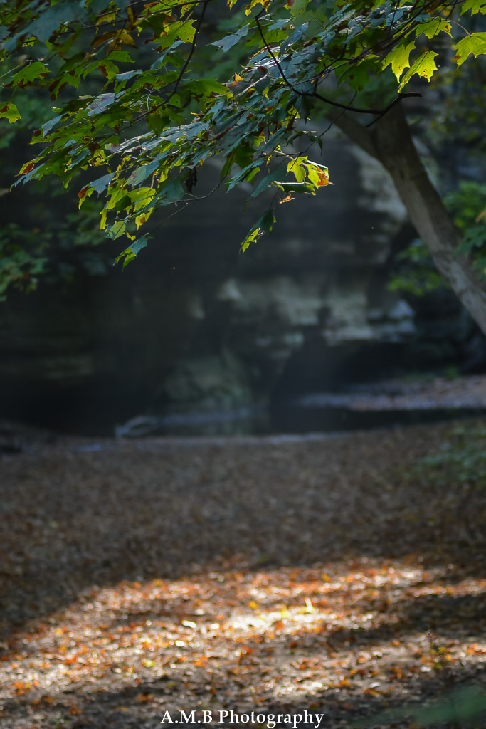 As we were hiking along the Illini Canyon floor at Starved Rock State Park, I saw the slight mist in the air with the sunglight shining thru. I knew this would be a good one. Captured in the Fall of 2017.
