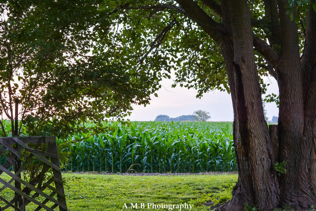 "The backyard of our new home in Dana, Illinois. Capture July 3, 2017 before watching a ""local"" fireworks show. :)"
