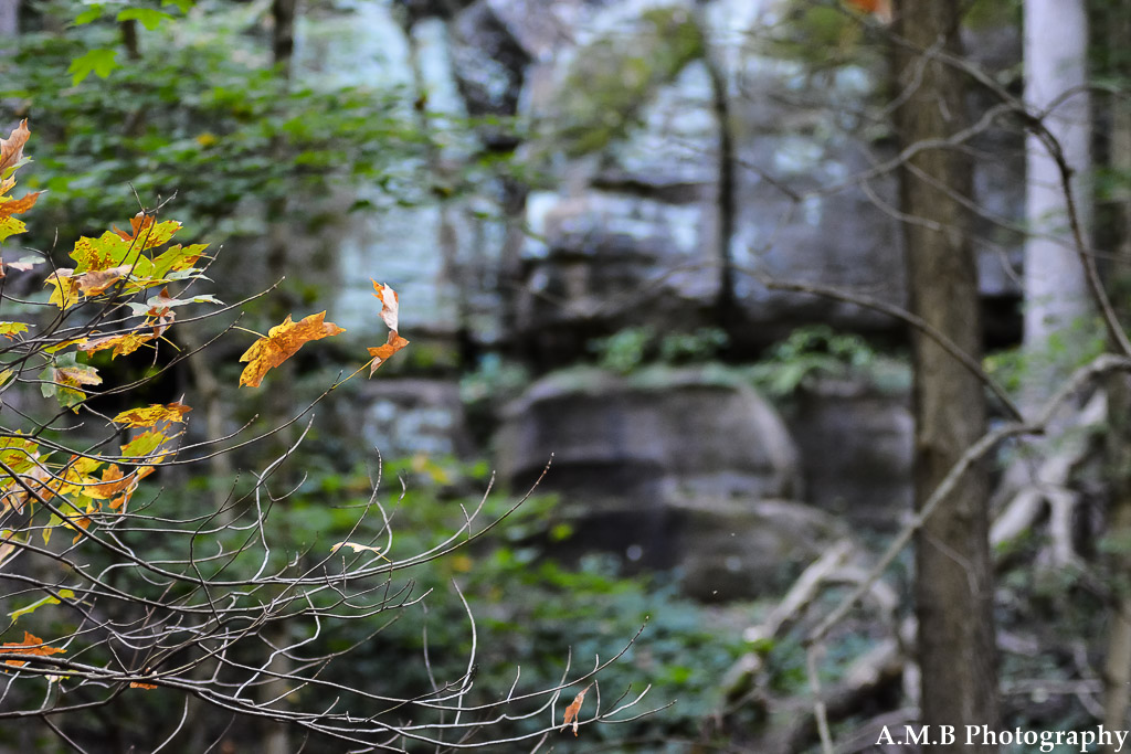 Walking through the Illini Canyon at Starved Rock State Park was amazing. Fall leaves scattering the ground, trees changing color, and the enormity of the cliff walls were lovely to see on the first full day of Fall in 2017.