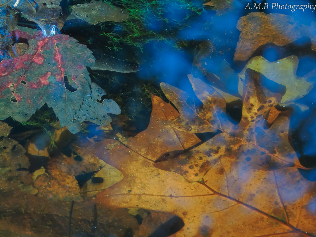 Reflection 4 - Taken alongside a creek in the fall, this stunning image is reminiscent of a famous piece of artwork.