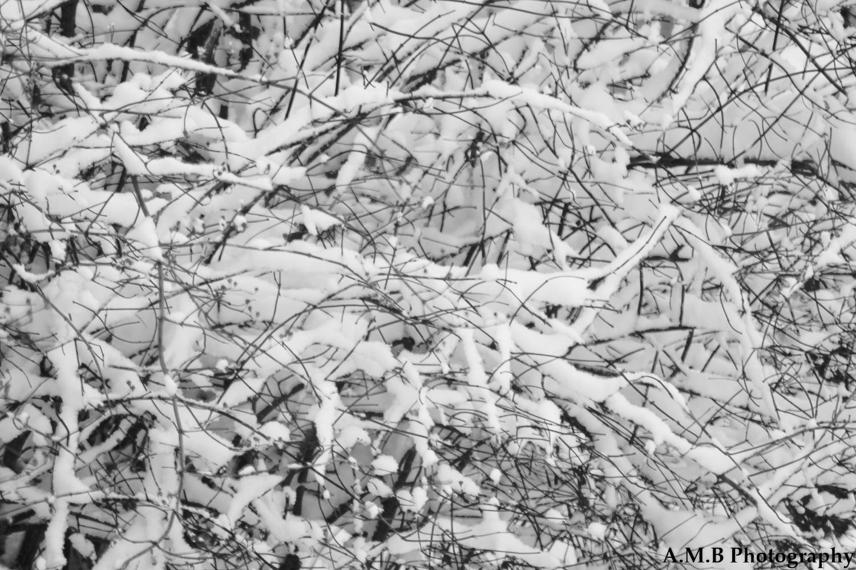 Snowy Backyard II