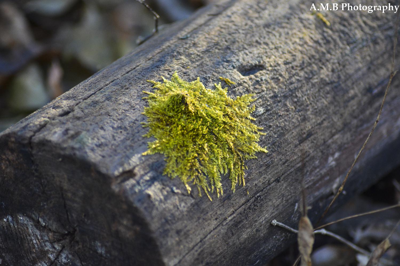 Splat of Moss