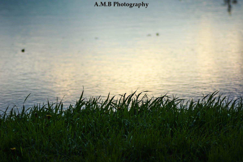 Sunny Flood V