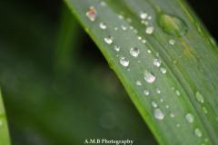 Droplets III