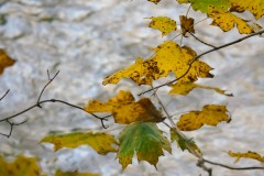 Fall Changes 2