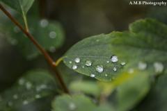 Fresh Rain II