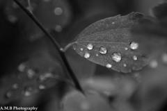 Fresh Rain III
