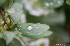 Fresh Rain
