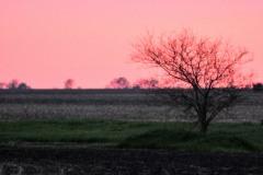 Spring Sunset IV